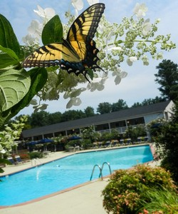 Arbors Apartments Located in Winston Salem Offers Two Swimming Pools and a Variety of Other Unique Community Features