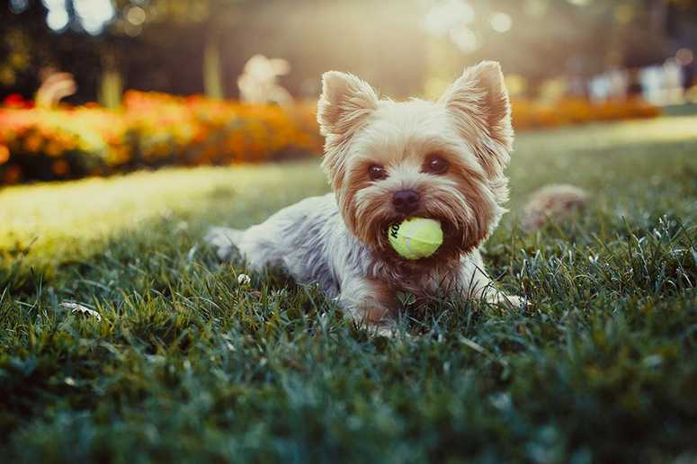 Our Apartments near Vintage Park are a Pet-Friendly Community