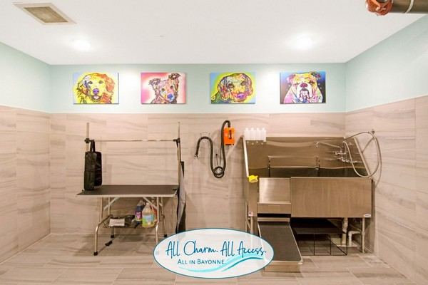 Interior image pet wash room