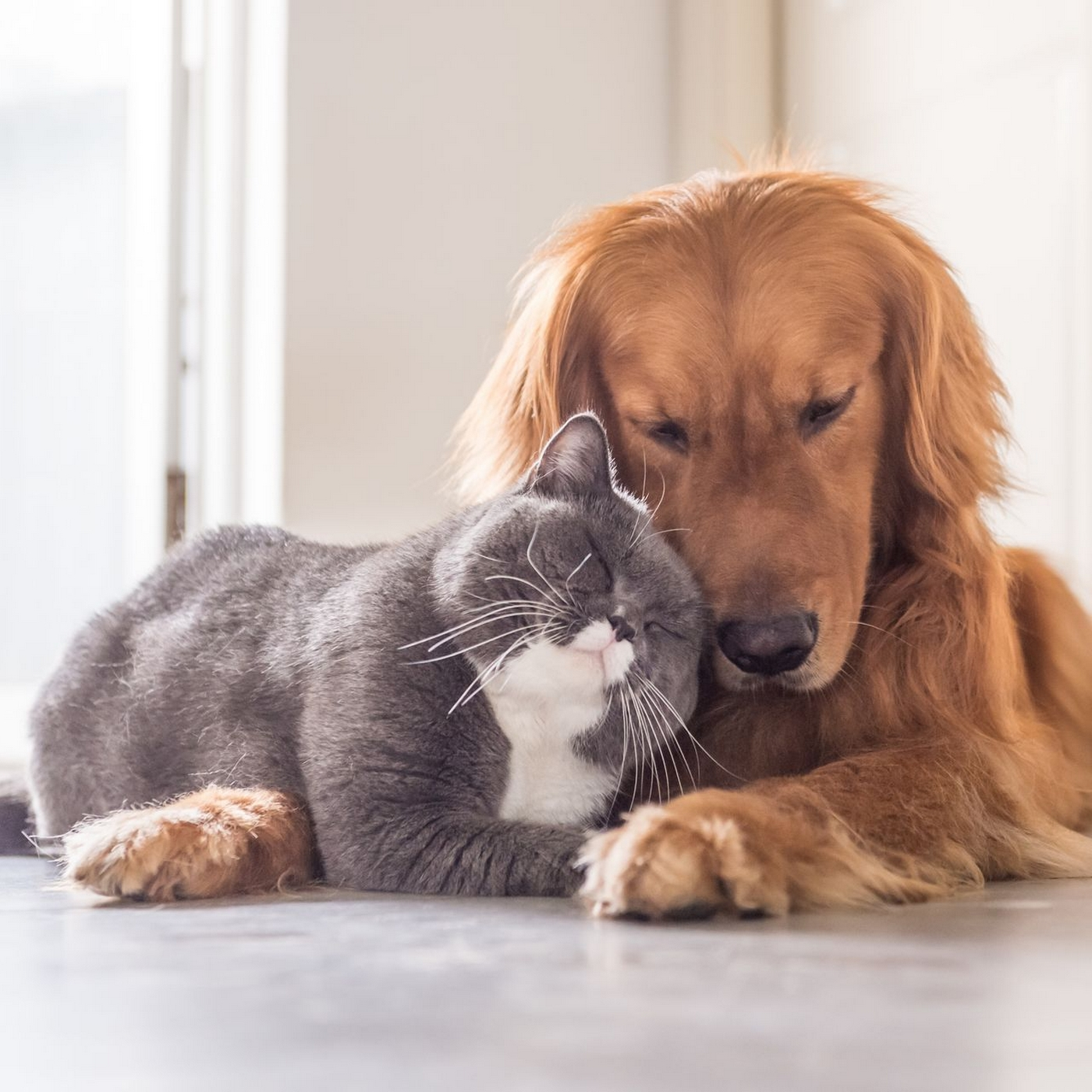 Image of dog and cat laying next to each other