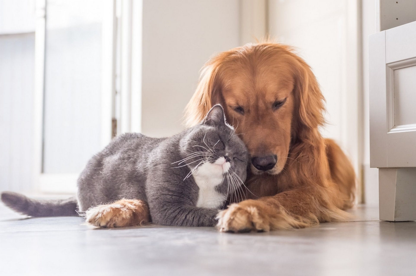 Cat and dog laying together on ground