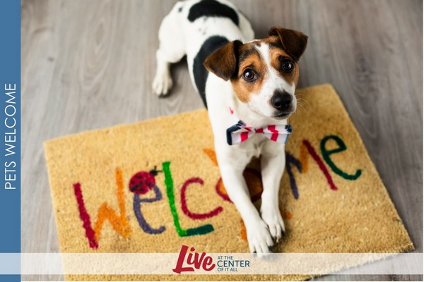 Image of a small dog laying on a welcome mat.