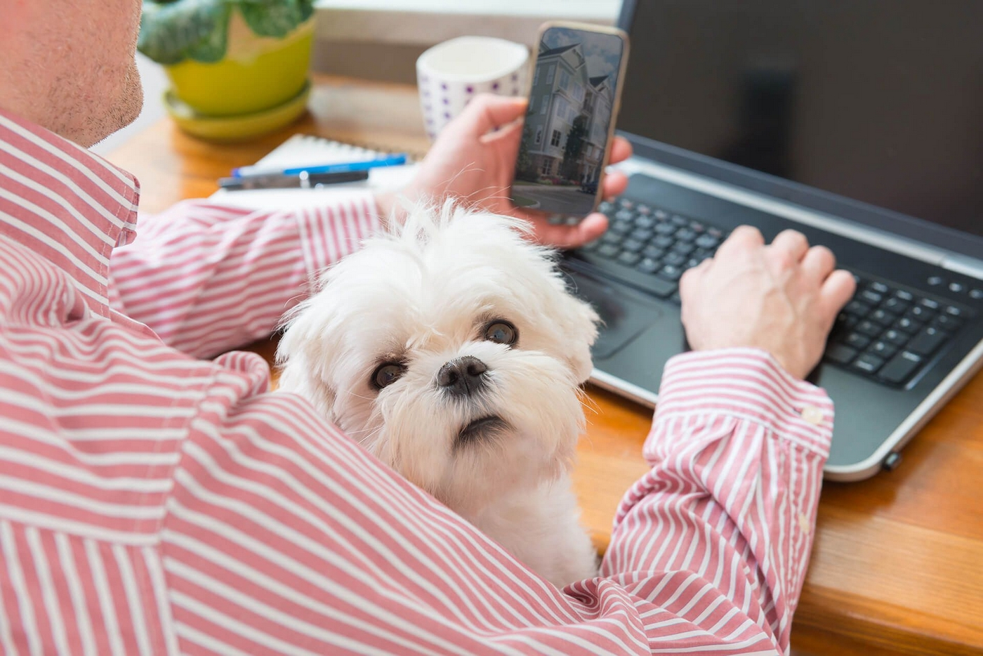 Image of a man on his laptop with a small dog in his lap