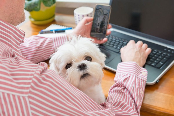 Image of a man typing on his laptop with a dog in his lap